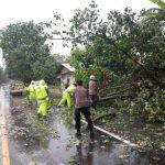 Sejumlah Pohon Tumbang, Satlantas Polres Lhokseumawe Lakukan Pembersihan
